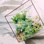 De vierkante glazen stolp: geliefd item onder interieurliefhebbers