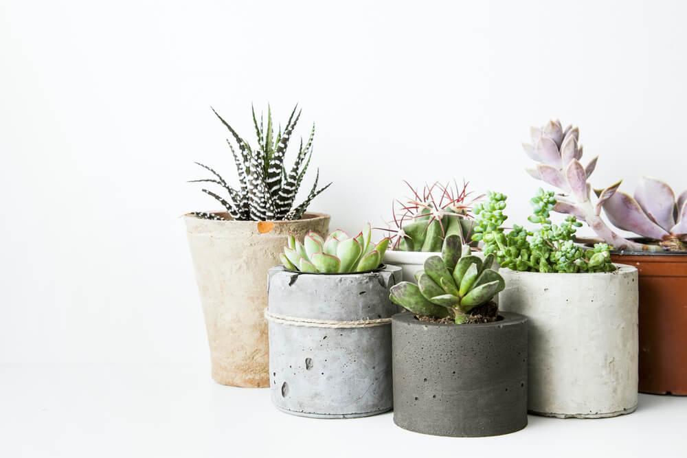 plantenwinkels nederland