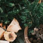 Genieten van je tuin in de winter: 3x tips
