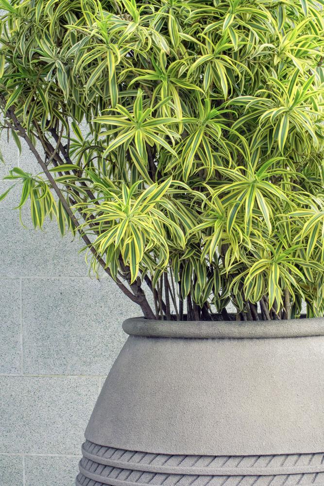 Plant in de woonkamer