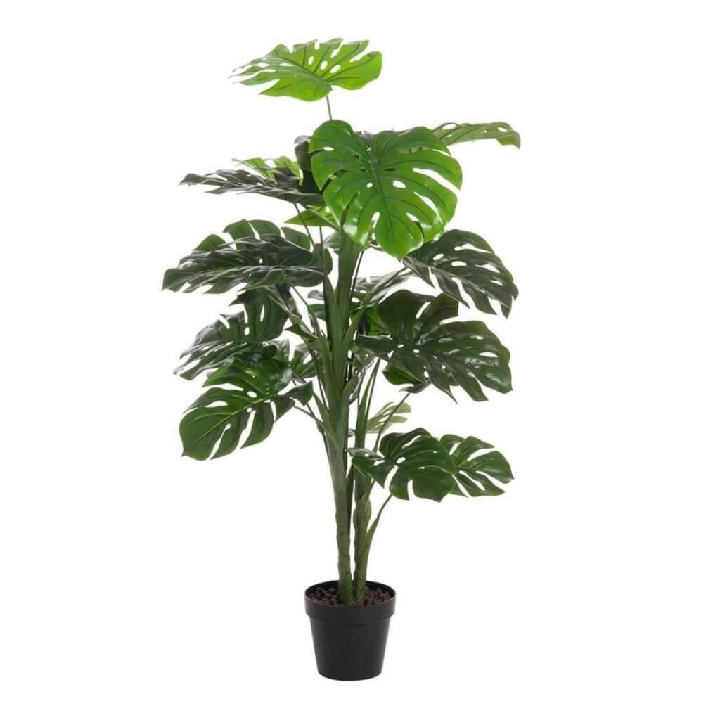 plant der planten