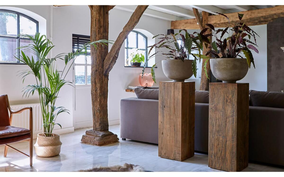 pilaar planten interieur