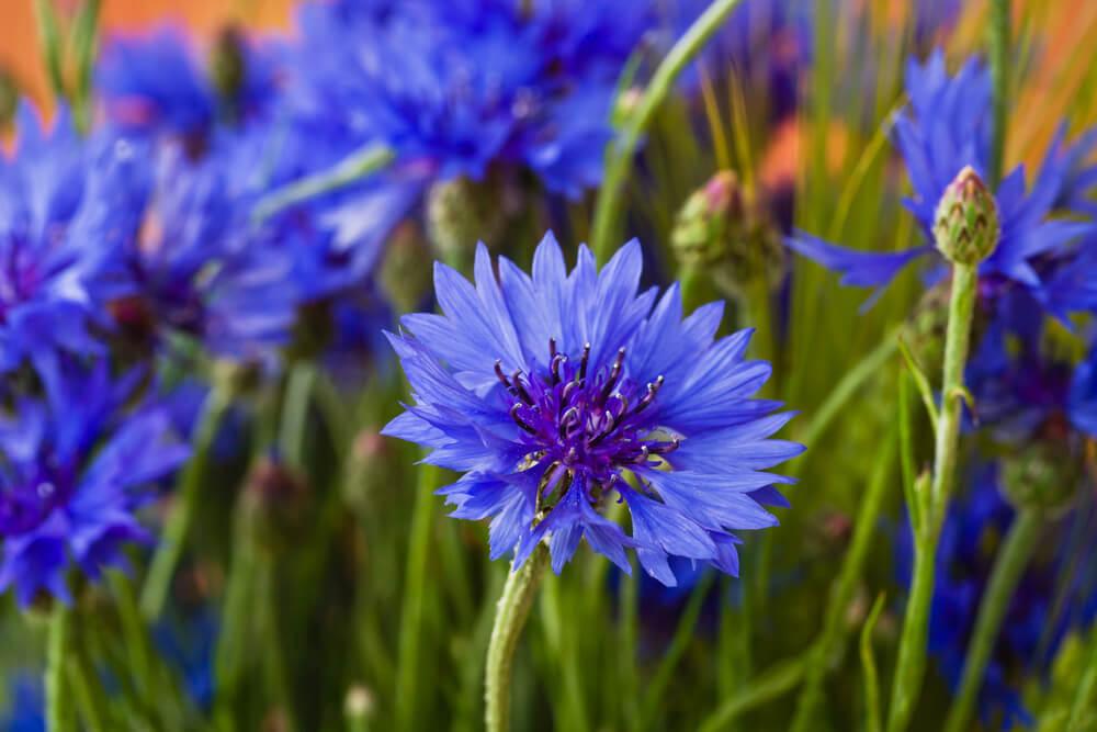 bloemen pluktuinen nederland