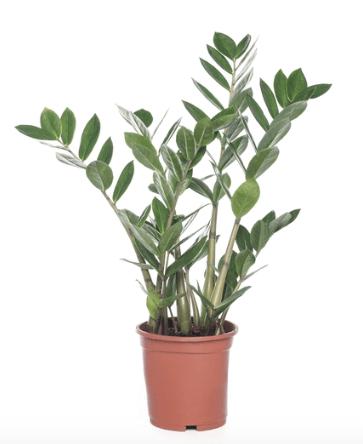 planten geschikt voor badkamer