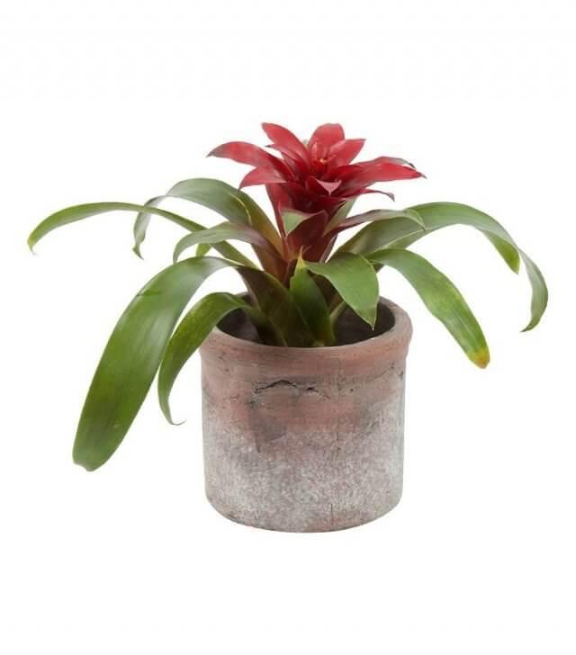 Tover jouw badkamer om tot tropische oase met deze 5 planten | Ik ...