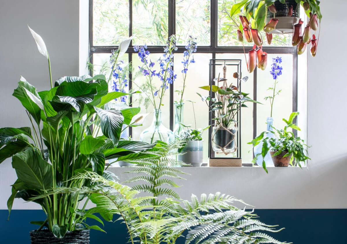 tropische kamerplanten