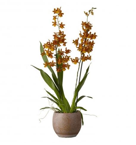 kleurrijke kamerplanten