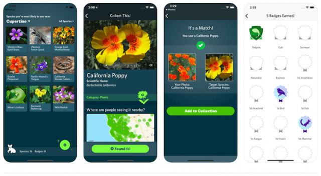 iNaturalist om planten te herkennen