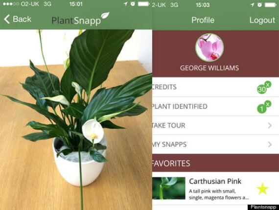 Plantsnapp planten herkennen