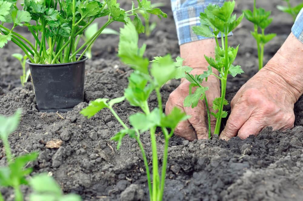 tuin aanleggen kosten besparen