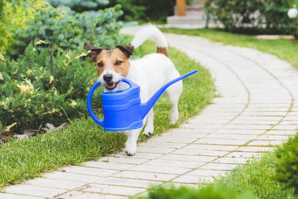 tuin fijne plek hond maken