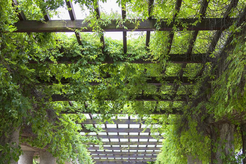 Begroeide pergola met boomtakken