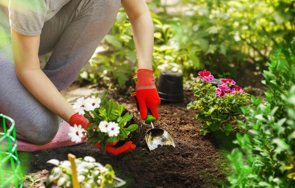 budget tuinieren