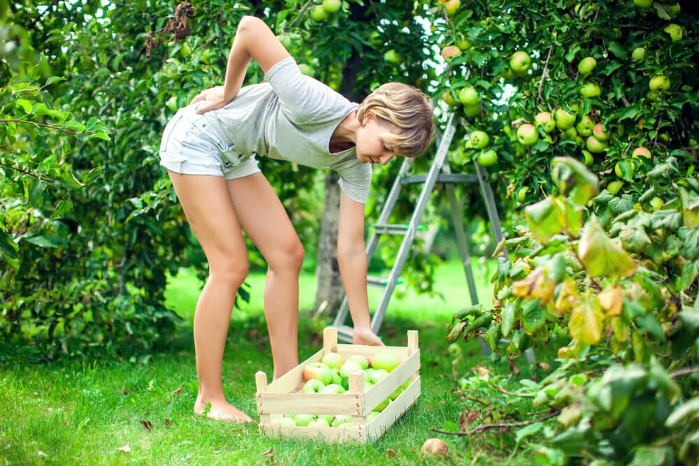 tuinieren rug tips