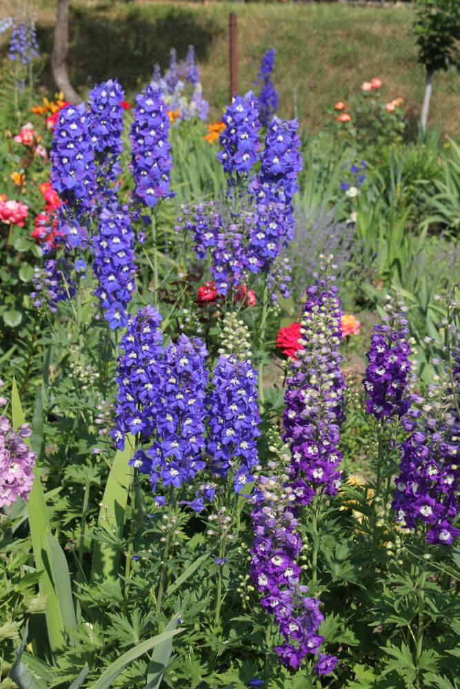 planten kleur najaar