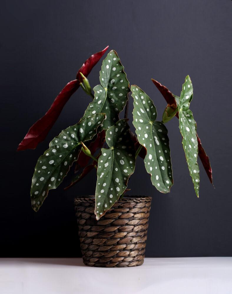 retro plant