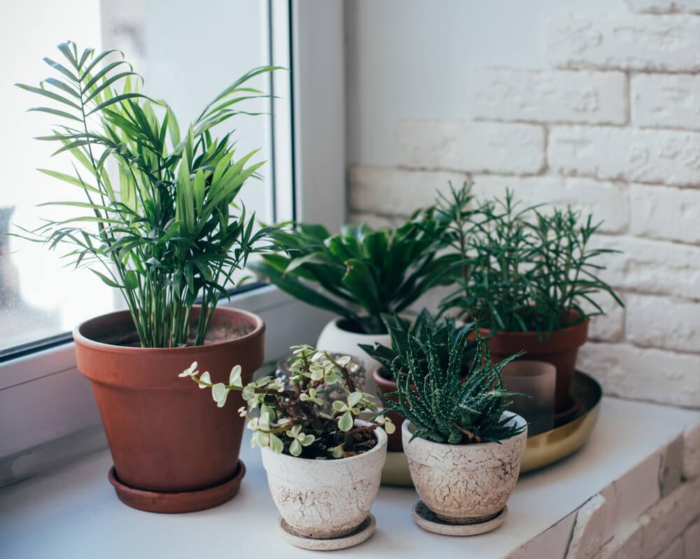 Kleine planten in de vensterbank