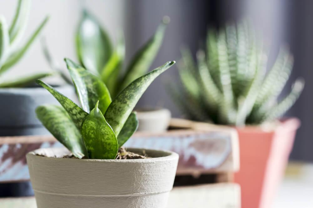 fotogenieke planten