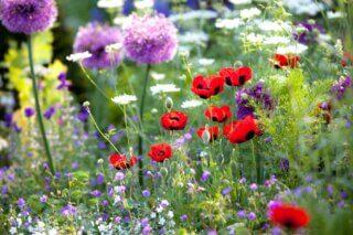 Een tuin vol wilde bloemen