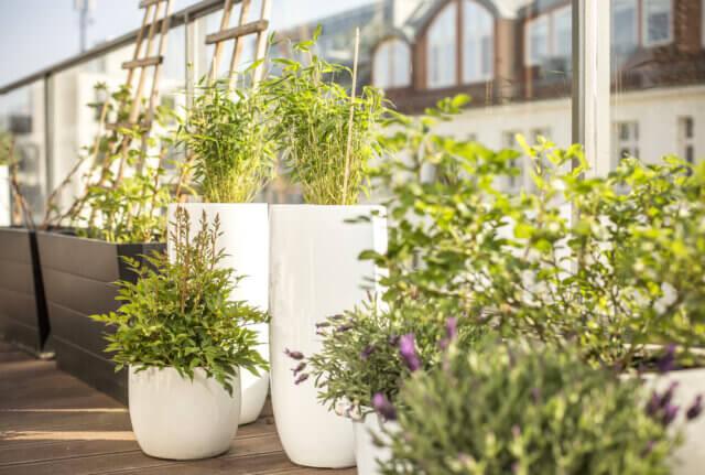 Prachtig: een dakterras met veel planten