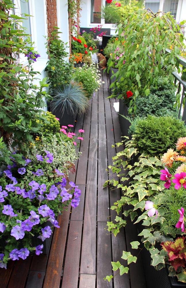 Smal balkon vol planten