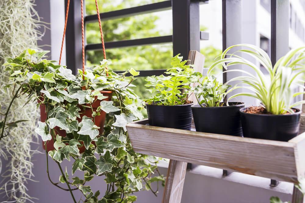 Moderne plantjes op balkon