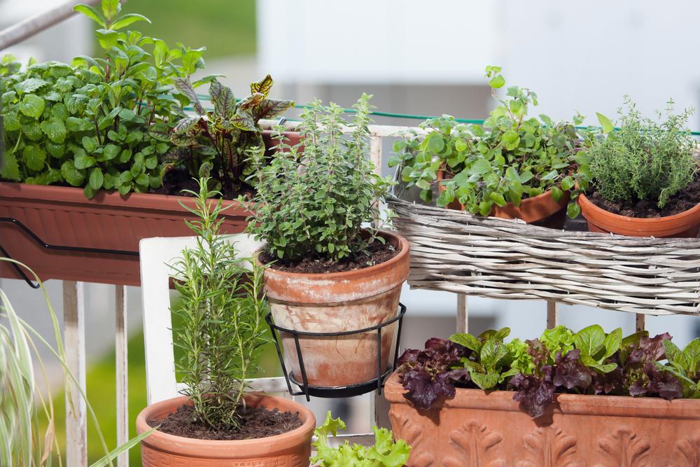 Gezellige balkonplanten in potten en manden