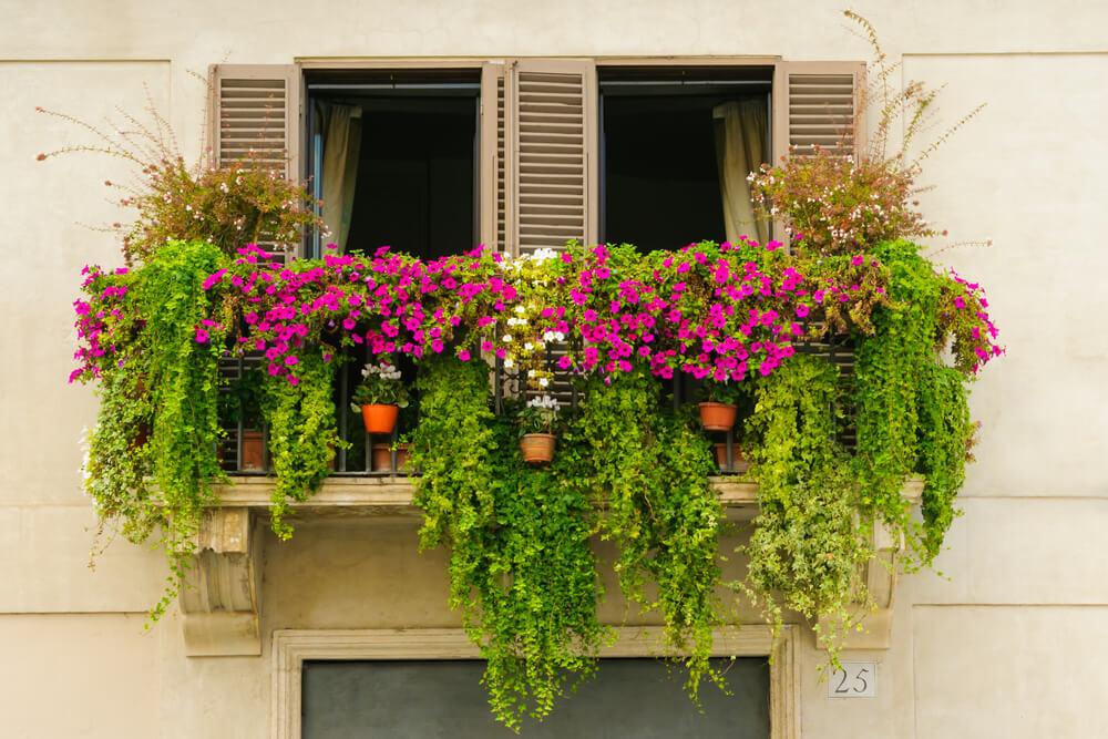 Compleet groene balkontuin