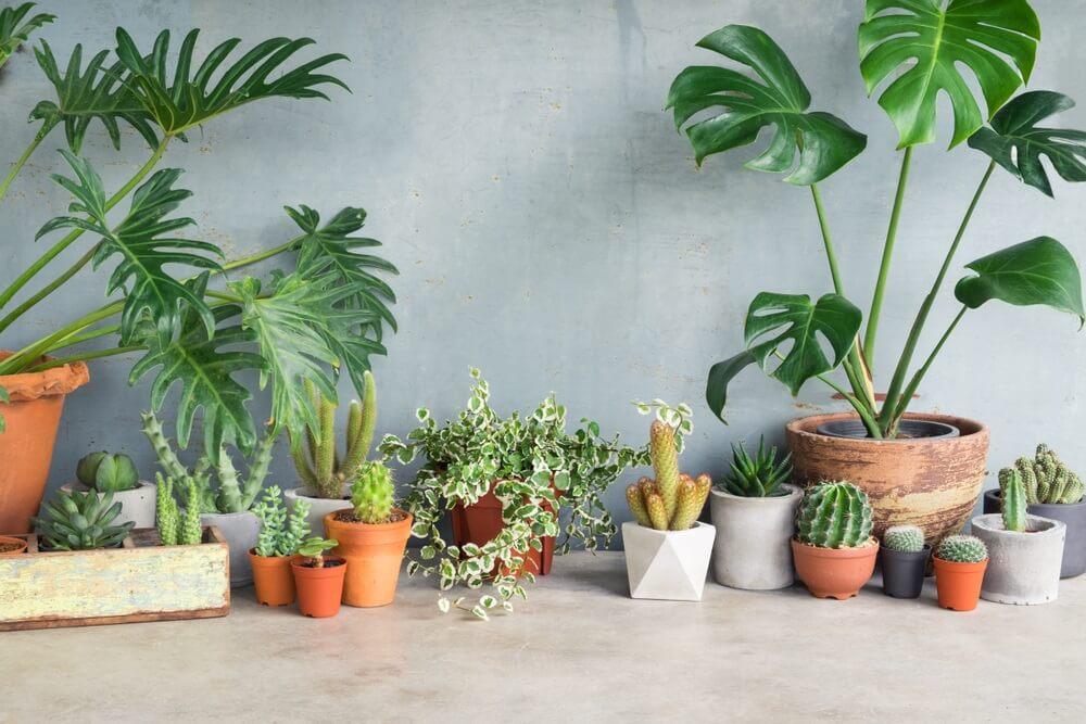Planten in huis zorgt voor een natuurlijke sfeer