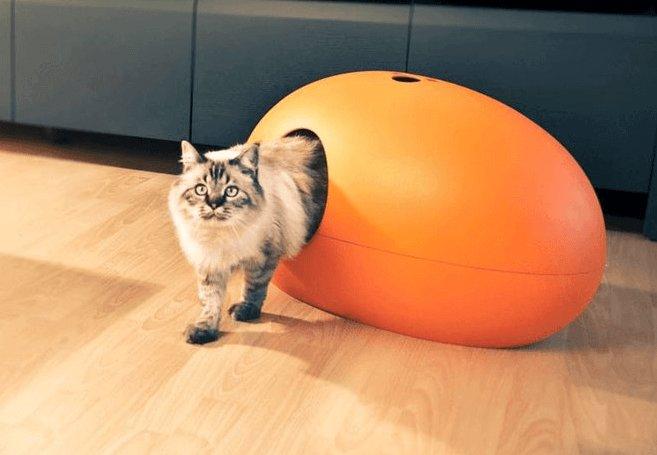 Opvallende kattenbak oranje