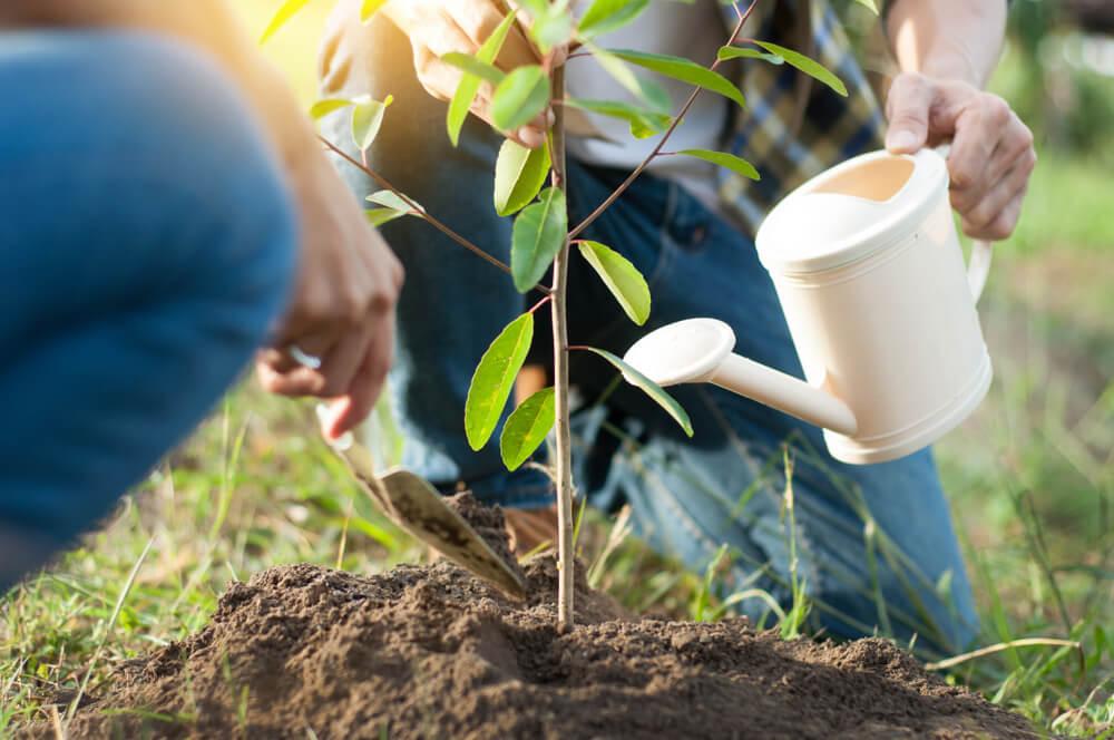 Een boom planten in de tuin: hier moet je op letten