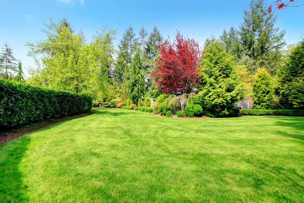 Tips voor mooie struiken in de tuin: lees onze blog
