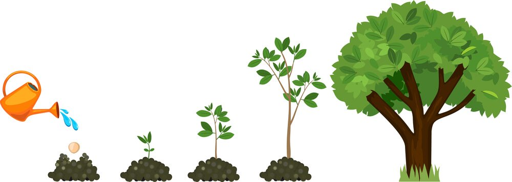 Bomen planten in eigen tuin: handige tips