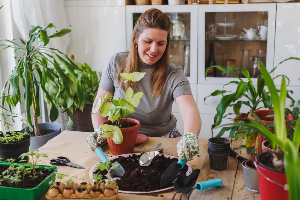 Kamerplanten verpotten: 5 handige tips