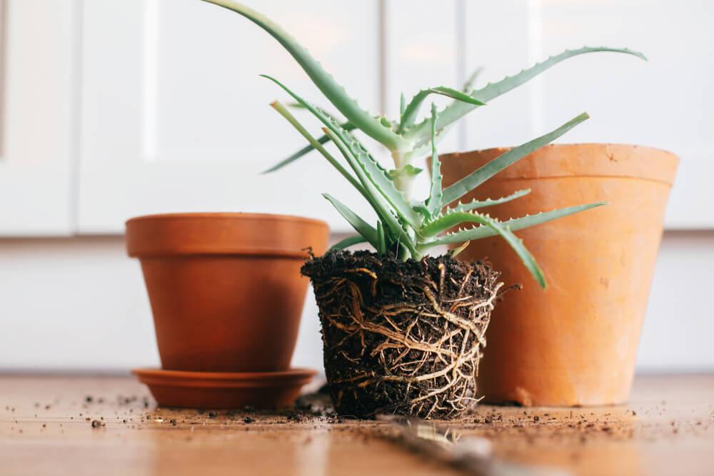 Hoe kamerplanten verpotten? Lees onze handige tips!