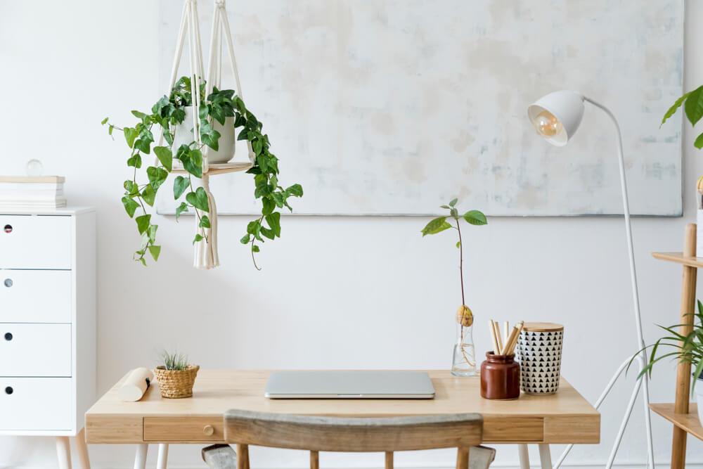Fan van hangplanten? 8x dít zijn leuke plekken in huis om ze op te hangen!