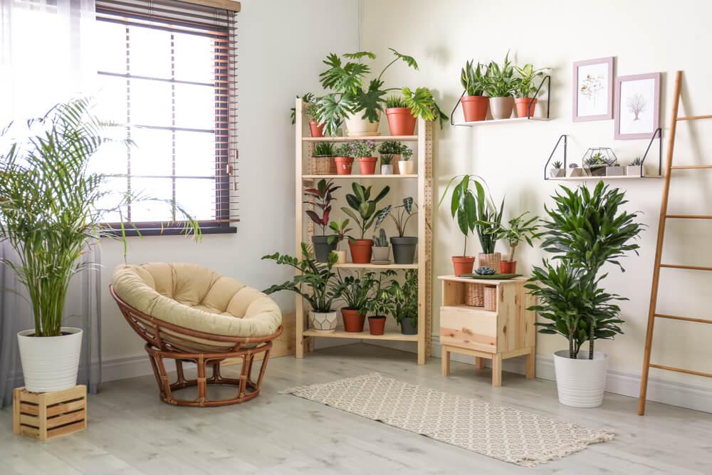 Een kast vol met planten in een botanische woonstijl