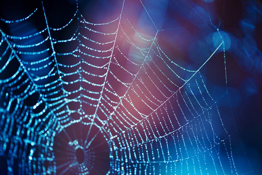 Minder spinnen in huis met deze 7 tips