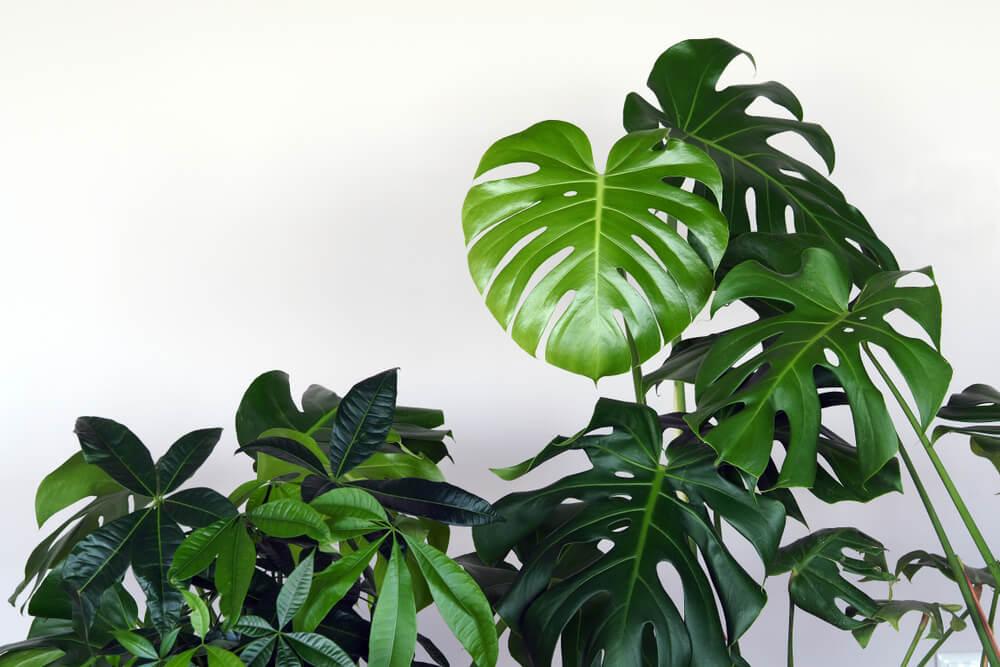 Planten in de herfst en planten in de winter: hoe verzorg je ze het best in huis?