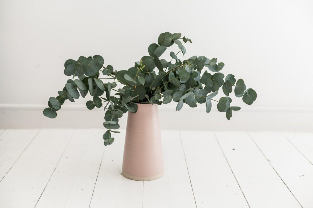 Eucalyptus in huis: zó kun je deze hippe gezonde topper stylen in je interieur