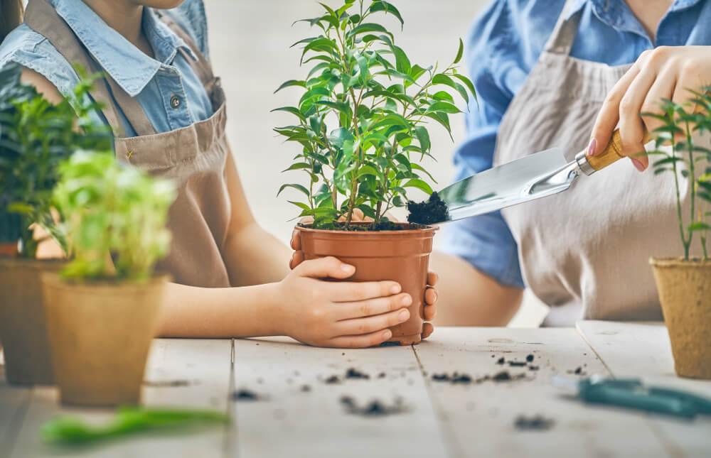 5 handige tips voor het succesvol stekken van je planten