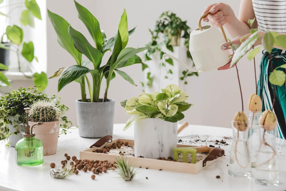 Het redden van je kamerplant die dood gaat: ontdek onze handige tips voor kamerplanten verzorging!