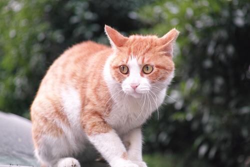 Katten uit de tuin jagen