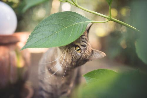 Kattenschrik tegen katten