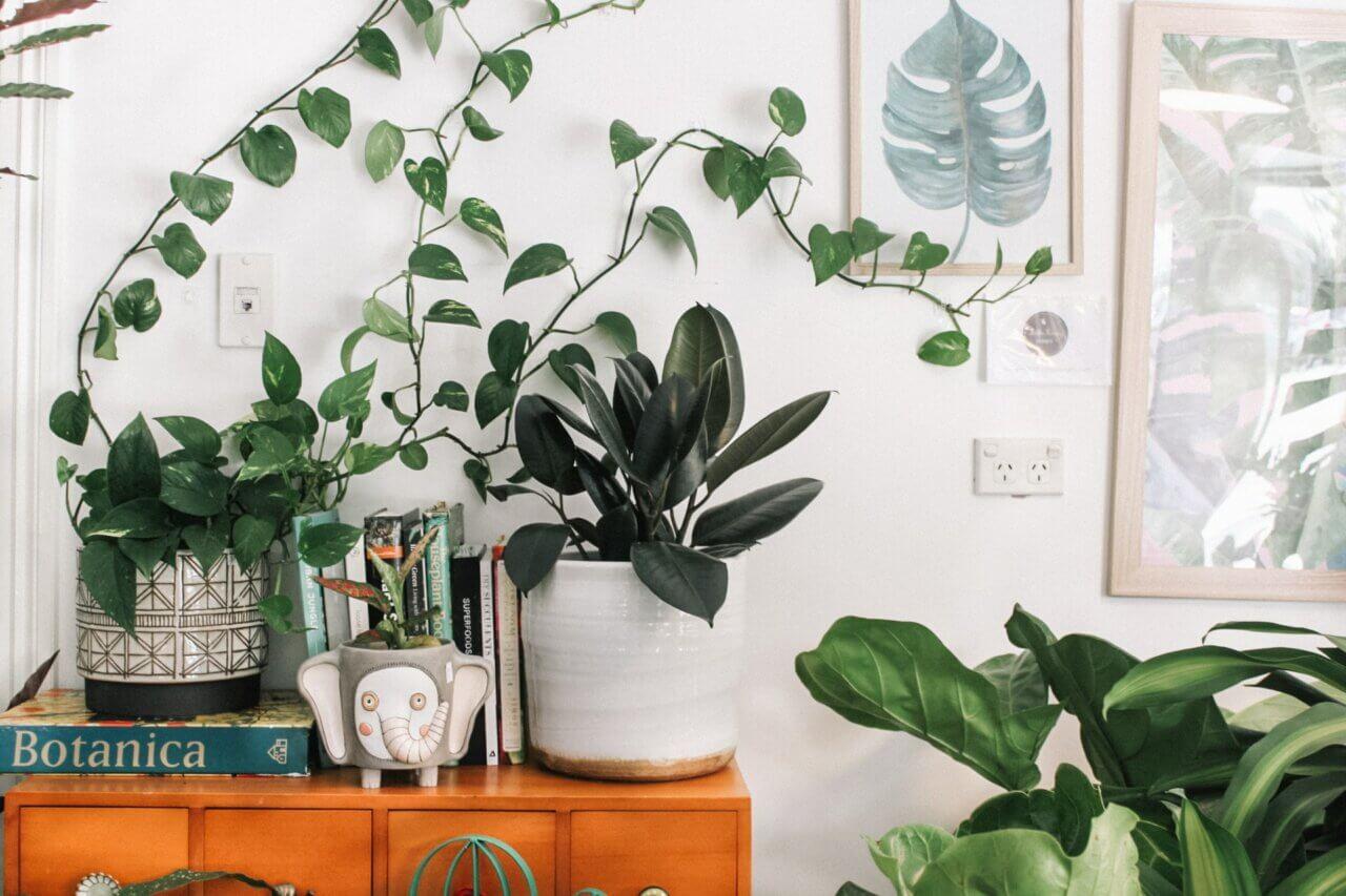 Je kamerplanten afstoffen: waarom is dit belangrijk én hoe doe je dit?