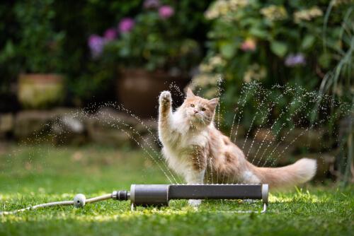 Kat met sproeier