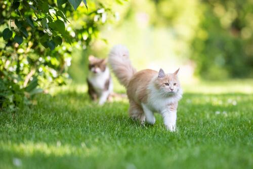 Katten in de tuin