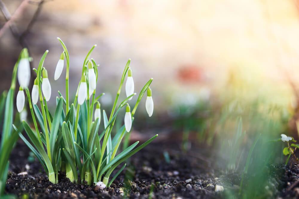 Tuin lenteklaar maken: handige tips