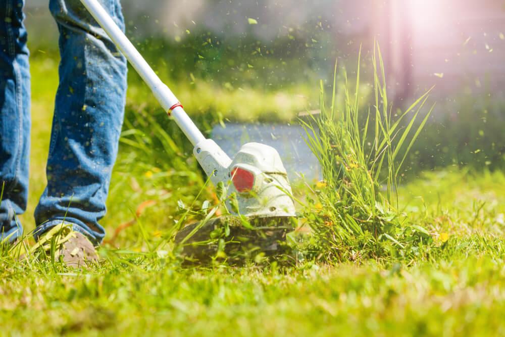 Lente tuin tips: ontdek ze allemaal