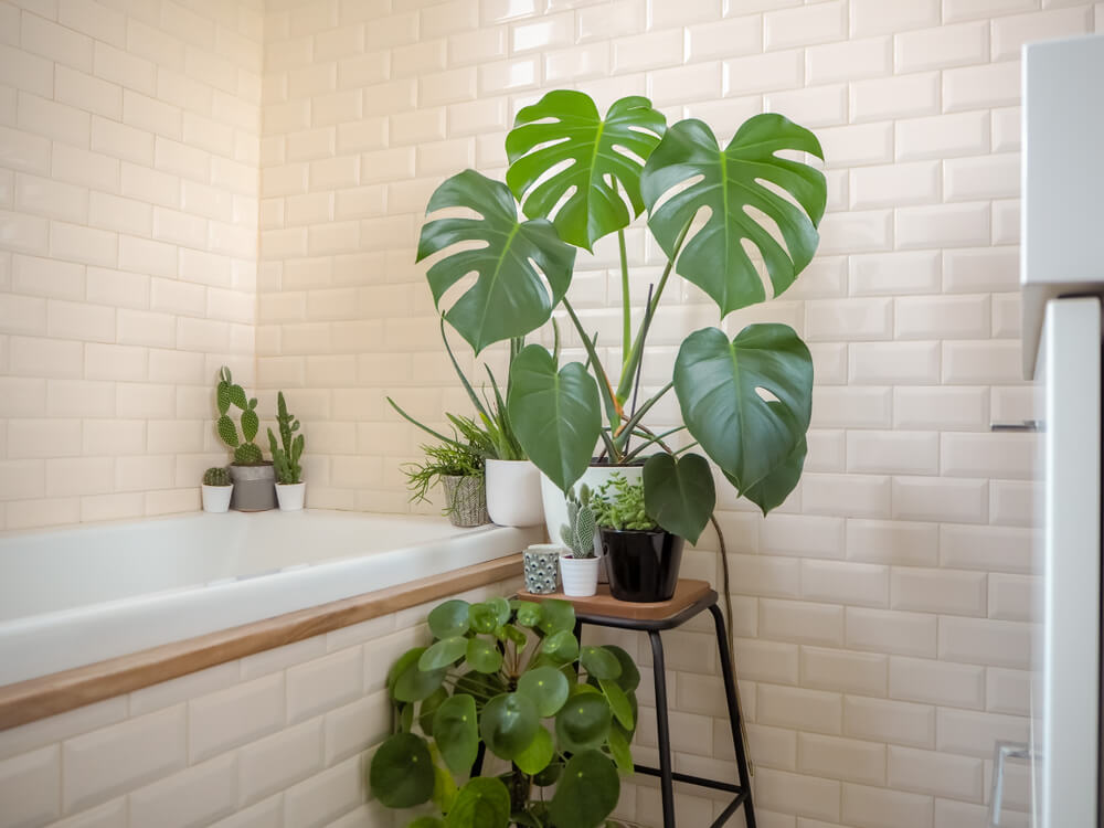11x Welke kamerplanten overleven het in de badkamer?.jpg